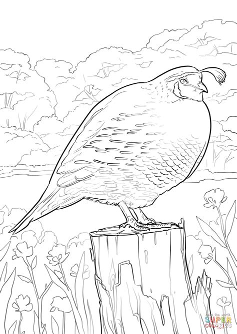Quail Coloring Page California Quail Coloring Page Free Printable Coloring Pages