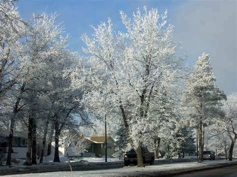 Gardeners Winter by Trees To Catch Our Eye In Winter Canada S Local Gardener