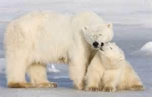 Endangered Species Polar Bear Habitat