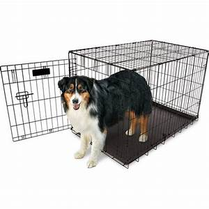 aspen pet 36 in home training wire kennel academy With aspen pet dog kennel
