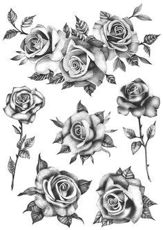 70+ Best DRAWINGS OF ROSES images | drawings, roses
