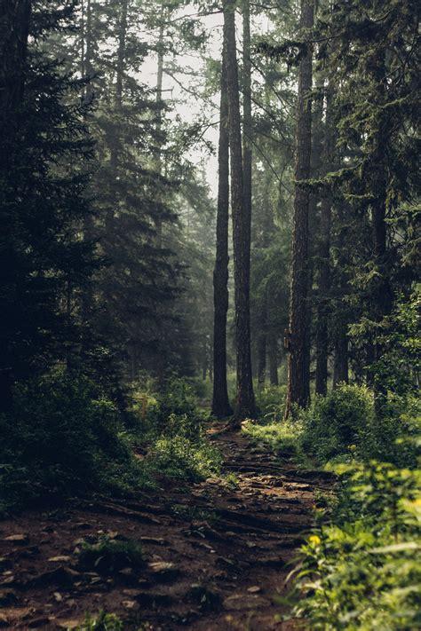 woke    forest    world