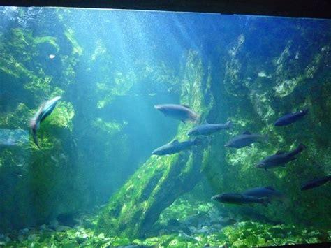 aquarium du grand lyon visite aquarium du grand lyon