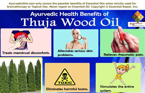 Health Benefits Of Thuja Essential Oil Essential Oil