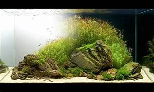 Aquarium L Form : 447 best images about aquascaping on pinterest cichlids ~ Sanjose-hotels-ca.com Haus und Dekorationen