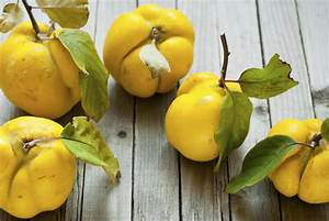 The quince: The fruit that started the Trojan War?   The ...