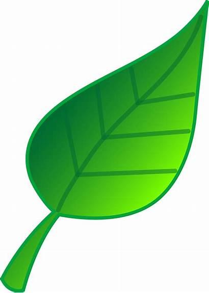 Clipart Leaf Leaves Clip Spring Nature Natural