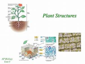 Ppt - Plant Structures Powerpoint Presentation