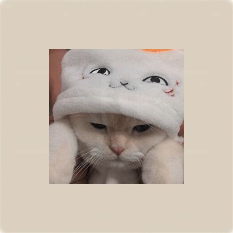 gambar hewan lucu anak kucing lucu