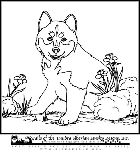 cute husky puppy coloring pages cute husky puppy coloring - Cute Husky Puppies Coloring Pages