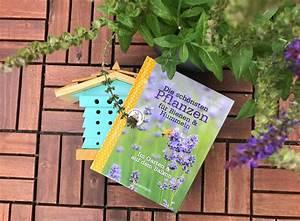 Welche Blumen Kann Man Essen : rezension die sch nsten pflanzen f r bienen und hummeln ~ Watch28wear.com Haus und Dekorationen
