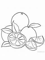 Grapefruit sketch template