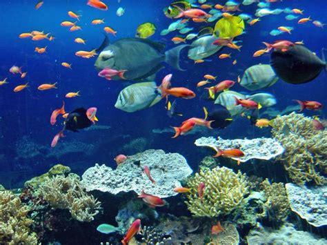 aquarium cote d azur entretien aquarium vente d eau de mer naturelle provence alpes c 244 te d azur