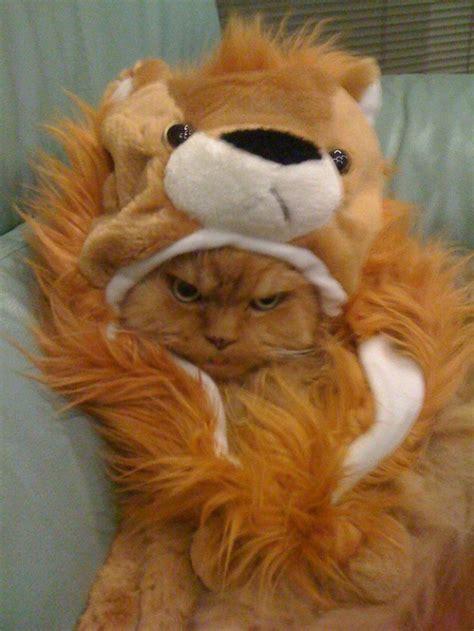 cute animal halloween costumes thaumaturgical