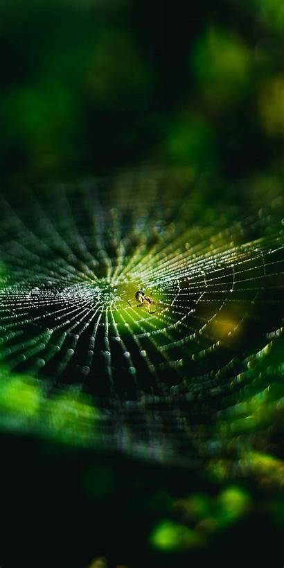 Spider Macro Nature Insect Wallpapersmug Iphone Honor