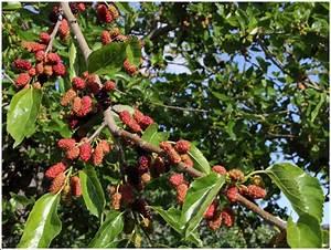 Was Ist Das Für Ein Baum : was ist das f r ein baum er steht in barca d 39 alva im dourotal an der grenze zu spanien das vo ~ Buech-reservation.com Haus und Dekorationen