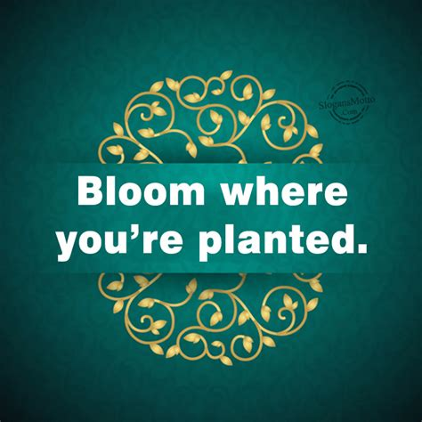 ♥ bloom where you're planted and happiness will follow. Life Slogans