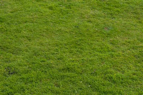 Light Wood Wallpaper Hd Grass Field Texture Pattern Pictures Free Textures And Free Photos