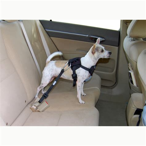 bergan car harness tether care  dogs