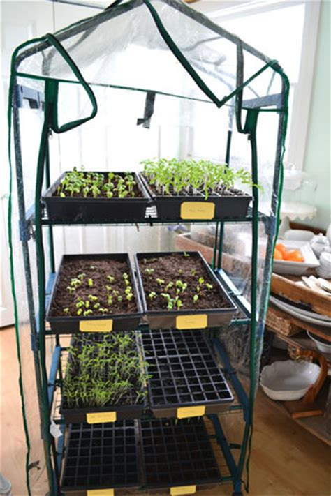 mini indoor greenhouse  lowes angies roost