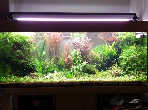 re eclairage aquarium 100 cm 28 images eclairage 224 led pour aquarium de 18 watts 100cm