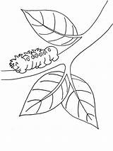 Branch Coloring Caterpillar Hairy Moving 800px Designlooter Caterpillars 06kb sketch template