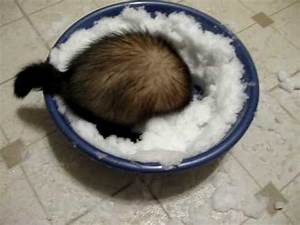 Cute - Ferrets Play With Snow