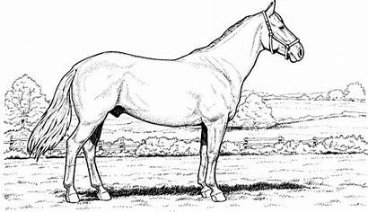 Horse Coloring Pages Horses Printable Field Ground