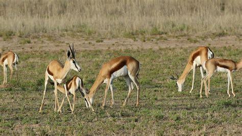 Linksfontein Safari Lodge Animals