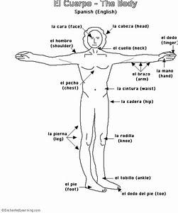 Human Body Diagram Labeled In Spanish