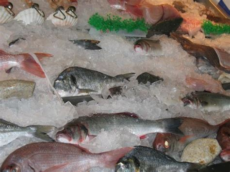 types  edible fish    divisions