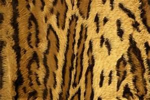 Wallpaper HD: Cheetah Print Wallpaper
