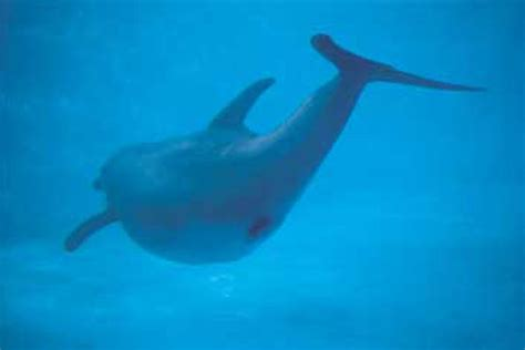 dolphins reproduction photografrica