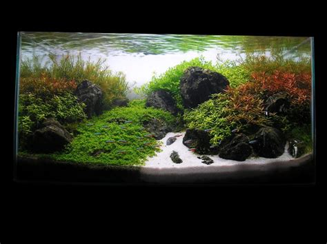 Aquascaping World by Aswc Top 12 Aquascapes Aquascaping World Forum