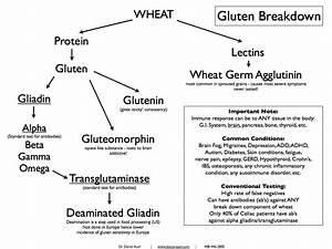 The Gist on Gluten — World Bread Company