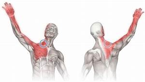 Massage For Neck  Chest  And Shoulder Pain  Scalenes