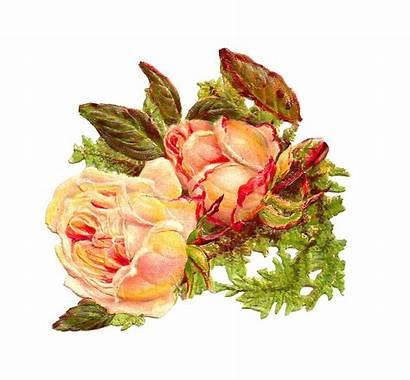 Yellow Rose Clip Antique Digital Roses Victorian