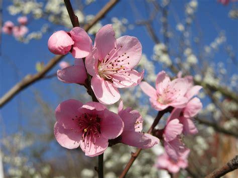 Free Images : sky fruit flower petal bloom food
