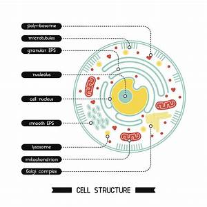 These Facts About The Cytoplasm Reveal Why It U0026 39 S Vital For