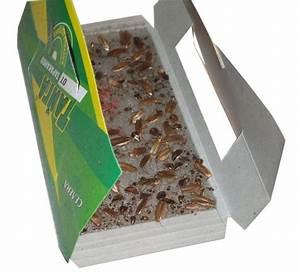 Piege A Cafard : bstw adh sif professionnel usine caract ristique de ~ Melissatoandfro.com Idées de Décoration