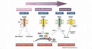 TRP channels: diagnostic markers and therapeutic targets ...