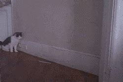 funny cat gif find share  giphy