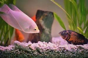 How Many Fish Will My Aquarium Hold?