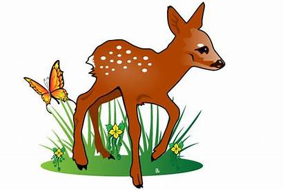 Nature Clip Clipart Fawn Illustration Vector Animals