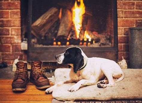 dogs for fireplaces 136 best images about dogs by the fireside on