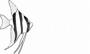 Fish black and white angel fish clipart black and white ...