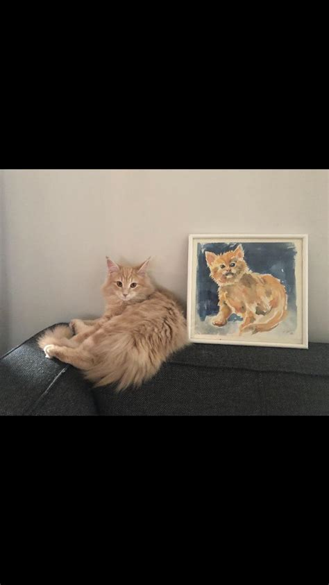 mom   picture  matches  cat aww