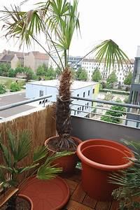 Welche Erde Für Palmen : palmen und co welche palmenart trachycarpus fortunei ~ Watch28wear.com Haus und Dekorationen