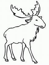 Coloring Elk Moose Colorir Desenhos Printable Alces Animal Elch Imprimir Simple Ausmalbilder Outline Desenho Drawing Animais Alce Deer Template Konabeun sketch template