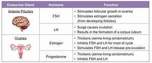 Menstrual Cycle | BioNinja